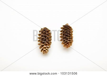 Two Cone Spruce Isolated On White