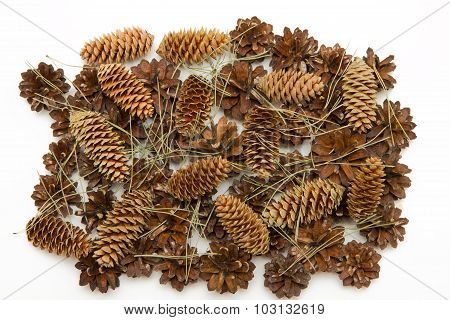 Group Cone Pine And Spruce Isolated On White