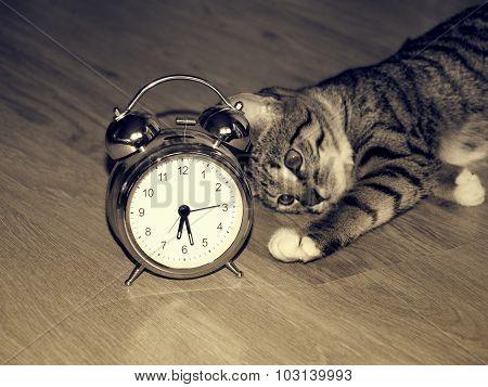 Alarm clock and kitten