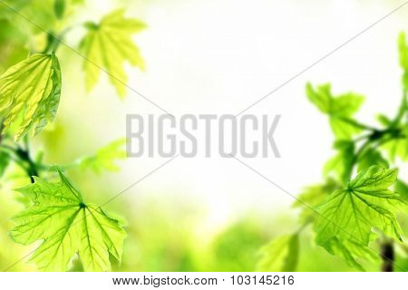 Fresh spring twigs with green leaves on blurred background