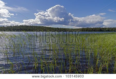 Pista River On A Sunny Summer Day. Karelia.