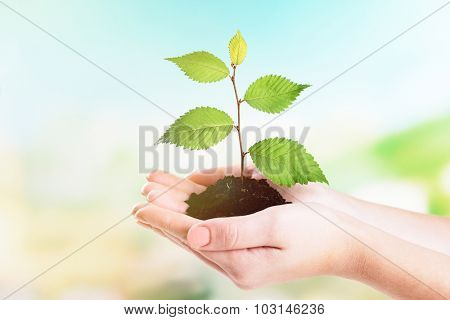 Hands of woman holding young plant on natural background