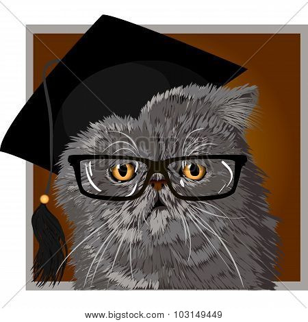 Persian cat with glasses and cap graduate