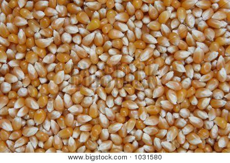 Unpopped Popcorn Kernals