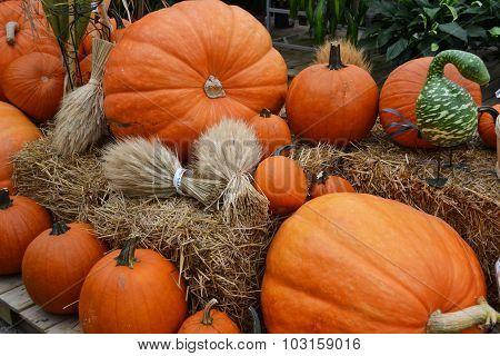 Harvest pumpkin display