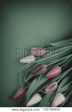 Beautiful bouquet of colorful tulips on green background