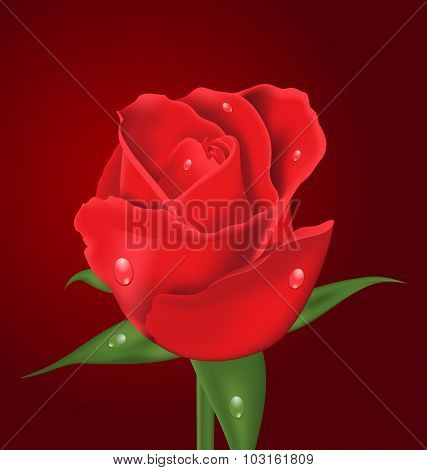 Close-up beautiful realistic rose on red background