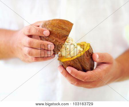 Man Opens Ripe Cocoa Pod In Hands