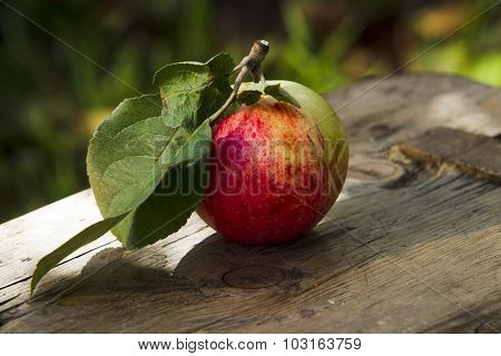 Apples On The Bench