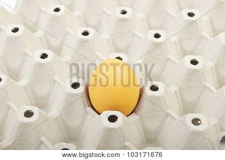 Egg in a cardboard box
