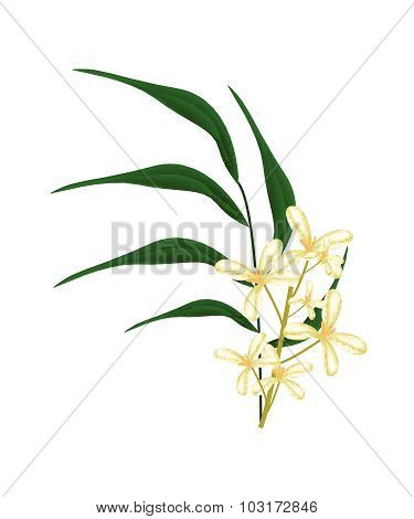 Beautiful Sweet Osmanthus Flower And Green Leaves