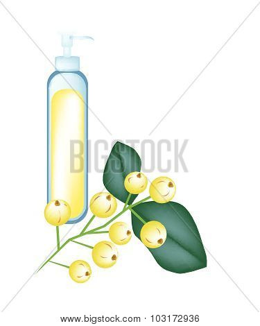 Bunch Of Yellow Aglaia Odorata Flower On White Background