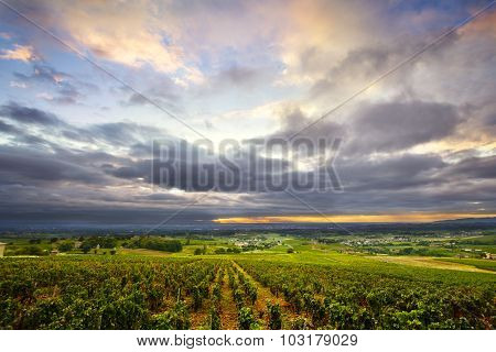 Clouds At Sunrise Time Over Vineyards Of Beaujolais, France