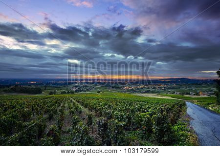 Sunrise Lights Over Vineyards Of Beaujolais, France