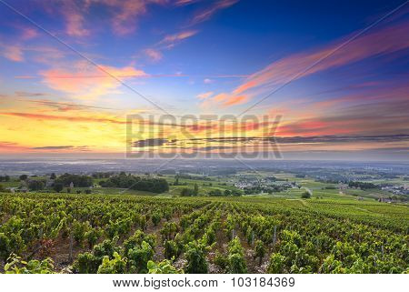 Vineyards And Sunrise, Beaujolais, Rhone, France