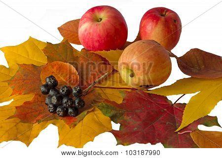 Autumn Bouquet And Apples Ans Black Rowan
