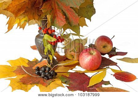 Autumn Leaves, Red And Black Rowan