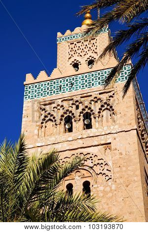 Palm In Maroc Africa  Minaret Religion And The Blue     Sky