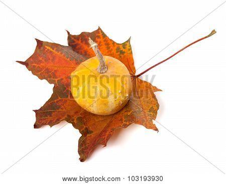 Decorative Small Pumpkin On Autumn Maple-leaf