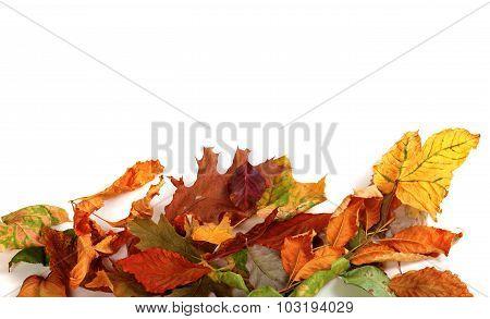 Multicolor Autumn Dry Leafs