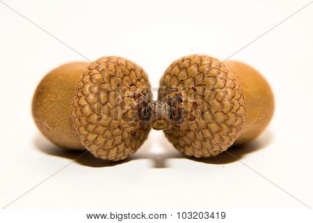 Two Acorn With Hats On Over White
