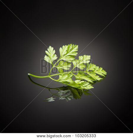 herb / chervil on black