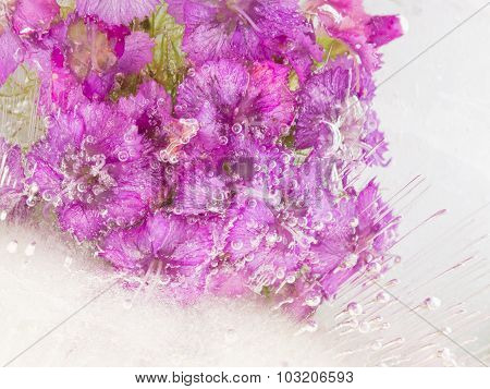 Bright Purple Flowers In Ice