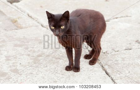 Lonely stray cat black with green eyes