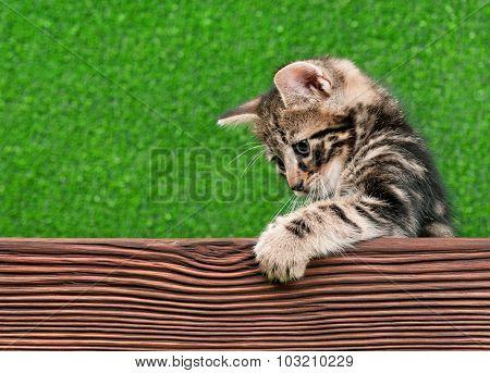 Cute little kitten with wooden plank on green background