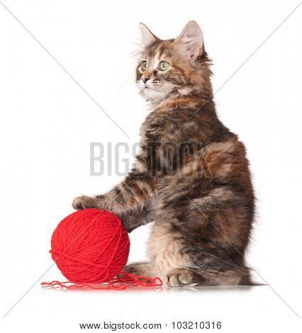 Cute little kitten with red clew isolated on white background