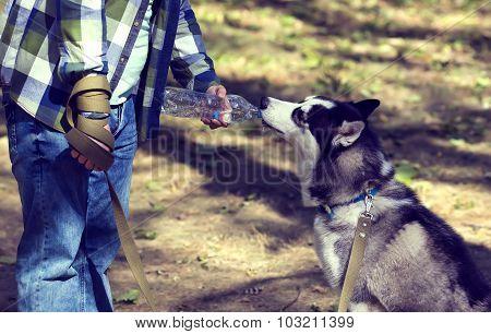 young man and the Siberian Husky