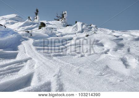 Fresh Snow Close Up