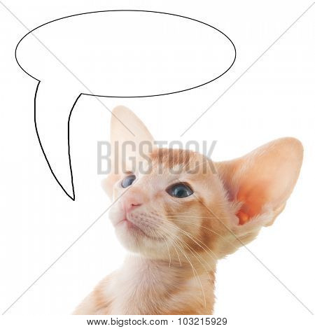 Portrait of red kitten with text balloon isolated over white background