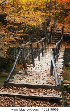 Bridge over river in autumn forest. Nature composition.