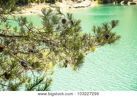 Pine branches on the background of turquoise lake