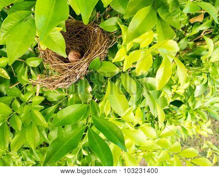 Bird Nest On Tree Branch With Cute Brown Eggs Inside