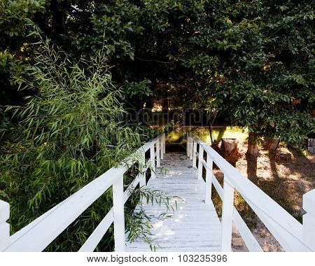 white bridge to a walking path in the trees
