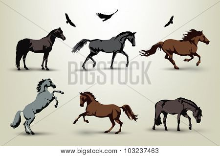 Collection of six wild horses and birds illustration
