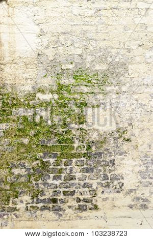 Old Moldy White Washed Wall