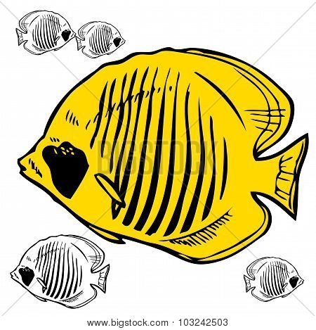Butterfly Fish Red Sea Picture