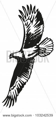 Eagle Flying Image