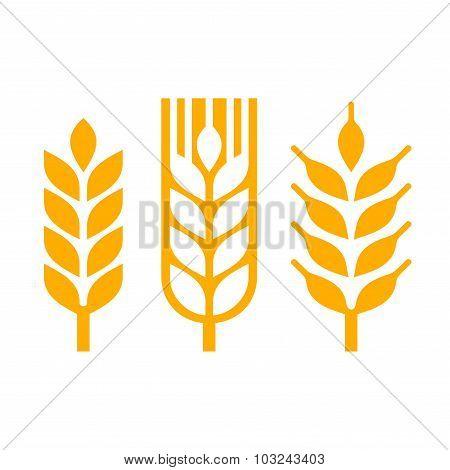 Wheat Ear Spica Icon Set. Vector