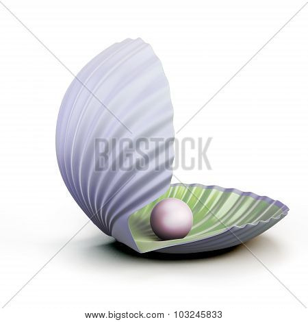 Shell Pearl Isolated On White Background.
