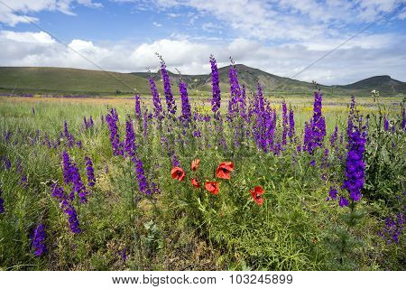Wildflowers On A Background Of Mountains.
