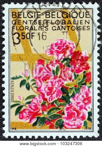 BELGIUM - CIRCA 1970: A stamp printed in Belgium shows Azaleas