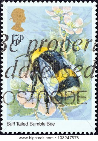 UNITED KINGDOM - CIRCA 1985: Stamp shows Buff Tailed Bumble bee (Bombus terrestris)