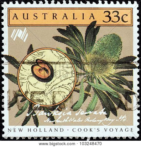 AUSTRALIA - CIRCA 1986: Stamp shows Cook's Voyage to New Holland, Banksia serrata