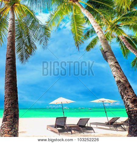 Amazing tropical beach landscape with palm trees