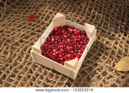 Ripe Red Cranberries In A Box On A Background Of Burlap