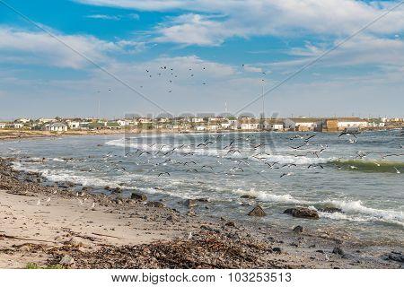 Flight Of Gulls
